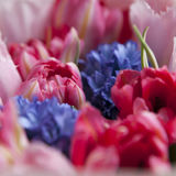 The Bouquet of white and pink tulips with blue hyacinths for the Stock Images