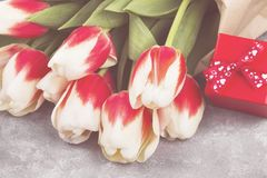 Bouquet of white pink tulips on a gray background. Toned.  Royalty Free Stock Photo