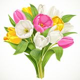 Bouquet of white, pink and yellow tulips Royalty Free Stock Image