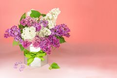 Bouquet white and purple lilac flowers in vase in a vase with a gift bow on table, copy space. PInk background stock photography