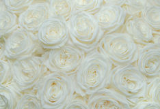 Bouquet white rose Royalty Free Stock Photo