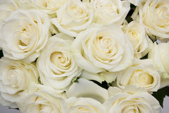 Bouquet white rose closeup. Background of flowers buds Royalty Free Stock Image