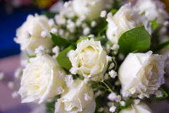 Bouquet of white rose flowers. With blurred background Royalty Free Stock Photos