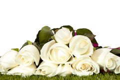 Bouquet of white rose. Stock Photos