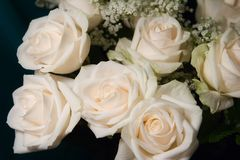 Bouquet of white roses Royalty Free Stock Image
