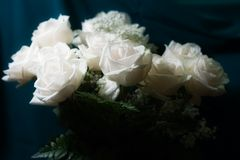 Bouquet of white roses. Glowing Stock Images