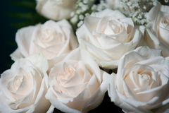 Bouquet of white roses. White roses closeup Stock Photo