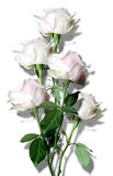 Bouquet from white roses Royalty Free Stock Photography
