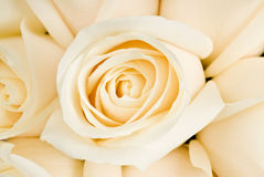 Bouquet of White Roses stock images