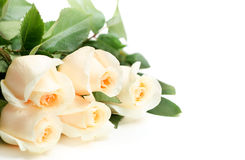 Bouquet of white roses. On white background Stock Image