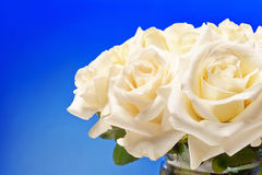 Bouquet white roses close-up Stock Images