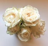 A bouquet of white roses. A close up photo of bouquet of white roses stock image
