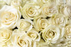 Bouquet of white roses, many flowers stock images