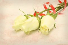 Bouquet of white roses  on texture background Stock Photo