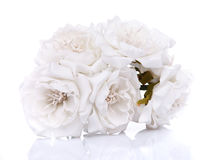 Bouquet of white roses on a white background Royalty Free Stock Photos