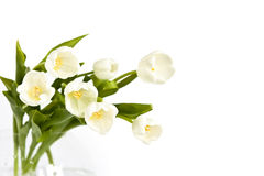 Bouquet of white tulips. Beautiful bouquet of white tulips in glass vase Royalty Free Stock Image