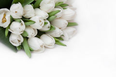 Bouquet of white tulips. On a white background Royalty Free Stock Photo