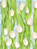 Bouquet of white tulips. EPS 10 Stock Photography