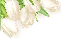 Bouquet of white tulips. EPS 10 Royalty Free Stock Images