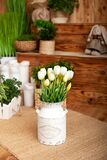 Bouquet White tulips flowers in a basket. interior of spring yard. Rustic terrace. Closeup of flower pots with plants. young plant