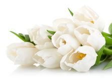 Bouquet of white tulips with green leaves Royalty Free Stock Photography
