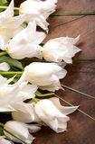 Bouquet of white tulips Stock Photos