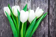 Bouquet of white tulips on a rustic background Stock Photos