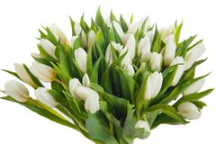 Bouquet of white tulips on white background. Bouquet of white tulips on background. Netherlandish tulip royalty free stock image