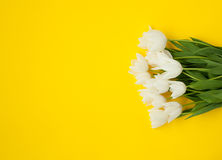 Bouquet of white tulips on yellow. From above view of fresh white tulips on yellow background Stock Photo
