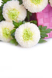 Bouquet of white Turkish carnation Royalty Free Stock Photography