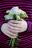 A bouquet of white wildflowers in the hands of a girl Royalty Free Stock Photography