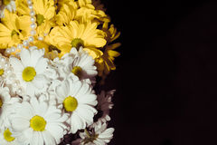Bouquet of white and yellow chrysanthemum Stock Image