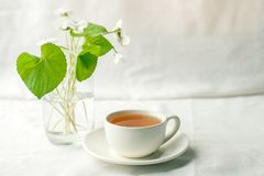 Bouquet of whitebells flower in a glass vase and cup of herbal tea. Snowdrop violet still life. Floral decoration. Spring and summ. Er time minimal close up royalty free stock image