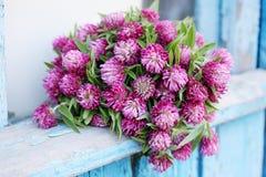 Bouquet of wild clover. Beautiful bouquet of wild flowers clover stock photos