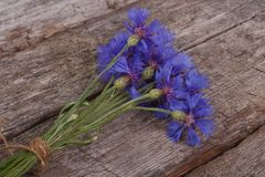 Bouquet of wild cornflowers Royalty Free Stock Photo