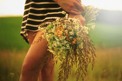 Bouquet of wild field flowers and herbs Royalty Free Stock Images
