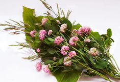 Bouquet of wild flowers Royalty Free Stock Photography