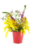 Bouquet of wild flowers Royalty Free Stock Images