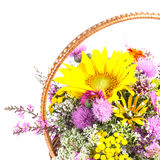 Bouquet of wild flowers Stock Photo
