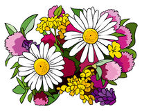 Bouquet of wild flowers. Beautiful bouquet of wild flowers, chamomiles and clovers, vector illustration Royalty Free Stock Photography
