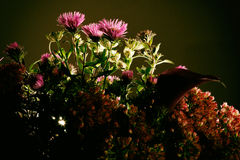 Bouquet of wild flowers on a dark background Royalty Free Stock Photo