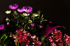 Bouquet of wild flowers on a dark background Stock Image