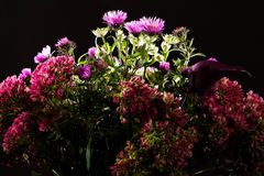 Bouquet of wild flowers on a dark background Royalty Free Stock Image