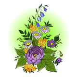 Bouquet with wild flowers. Hand drawing, vector illustration Stock Images