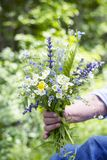 Bouquet of wild flowers in hand on a green background Royalty Free Stock Photo