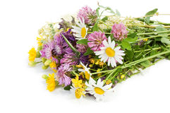 Bouquet of wild flowers isolated. On white background royalty free stock photos
