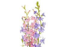 Bouquet of wild flowers isolated Royalty Free Stock Photography