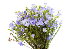 Bouquet of wild flowers isolated Royalty Free Stock Photos