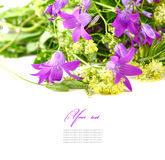 Bouquet of wild flowers on a white Royalty Free Stock Photo