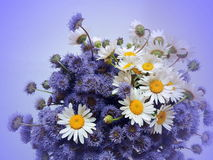 Bouquet of wild flowers Stock Photos